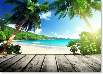 palm tree ocean wallpaper